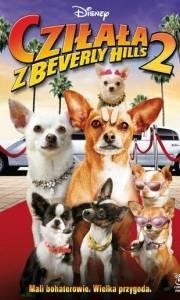 Cziłała z beverly hills 2 online / Beverly hills chihuahua 2 online (2011) | Kinomaniak.pl