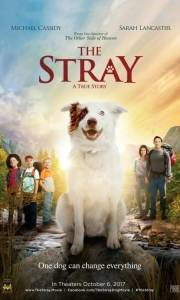 Stray, the online (2017) | Kinomaniak.pl