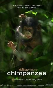 Szympans online / Chimpanzee online (2012) | Kinomaniak.pl