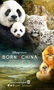 Born in china online (2016) | Kinomaniak.pl