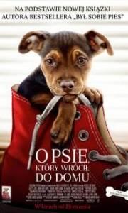 O psie, który wrócił do domu online / A dog's way home online (2019) | Kinomaniak.pl