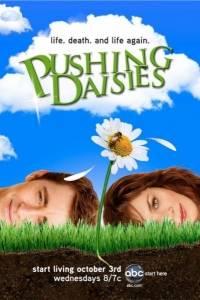 Gdzie pachną stokrotki online / Pushing daisies online (2007)   Kinomaniak.pl