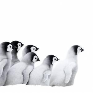 Marsz pingwinów 2: przygoda na krańcu świata online / L'empereur online (2017) | Kinomaniak.pl