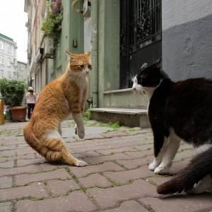Kedi - sekretne życie kotów online / Kedi online (2016) | Kinomaniak.pl